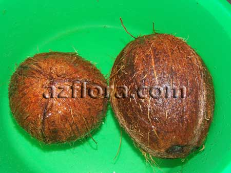 кокос замачивание